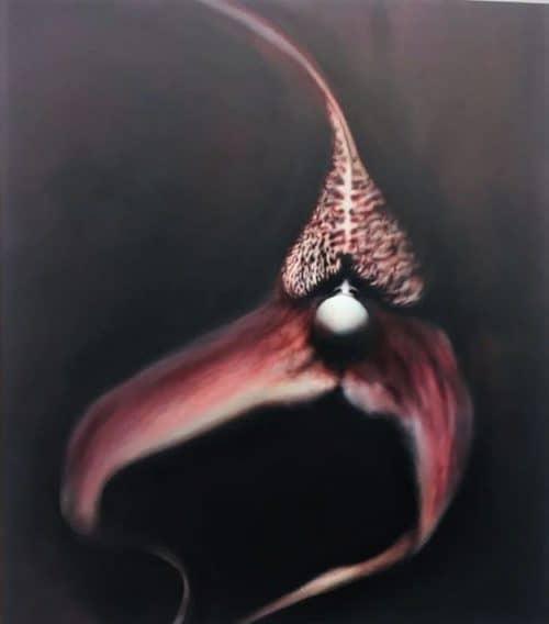 Pawel-Matyszewski-Dracula-Orchid-5.